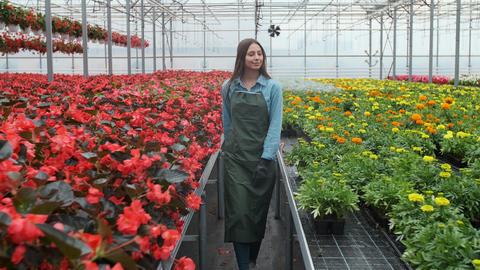 Young woman in the greenhouse with flowers checks a pot of red poinsettia on the Footage