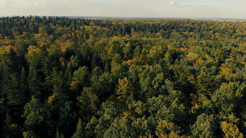 Aerial shot of the fairytale green wood in the Carpathian Mountains in summer Footage