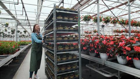 Agricultural Engineer Walks Through Industrial Greenhouse with shelving young Footage