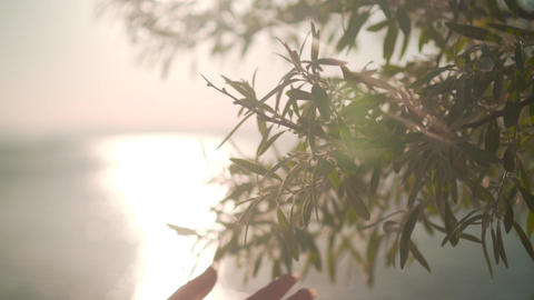 Woman sliding hand of green foliage in slow motion. Female hand touching the Footage