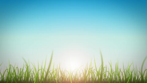Grass Leaves On Beautiful Sky Background Loop Animation