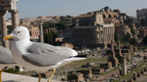 Seagull close up with ancient architecture in background Footage