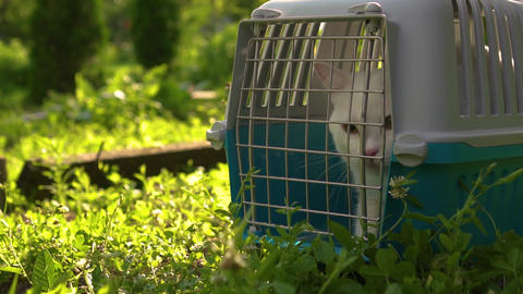 white cat sitting in a cage and trying to get out Live Action