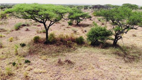 Safari journey through the African Savannah. Aerial footage wilderness savannah Live Action