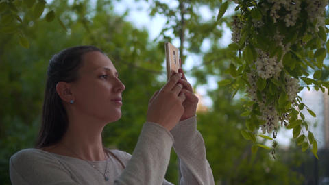A woman photographs a flowering white acacia on the phone in a park. Woman and Footage
