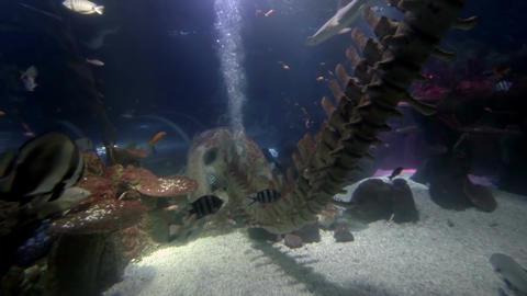 Sea life in aquarium 1 Stock Video Footage