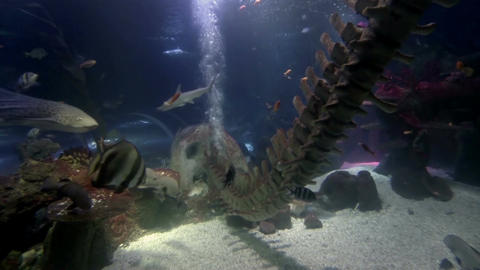 Sea life in aquarium 1 Stock Video Footage
