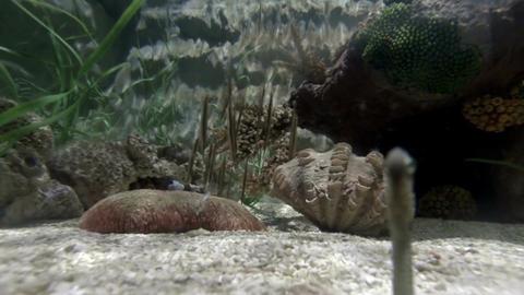 Sea life in aquarium 3 Stock Video Footage