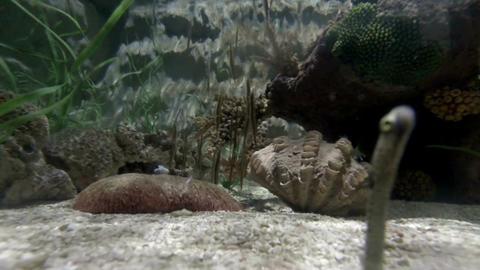 Sea life in aquarium 3 Stock Video Footage