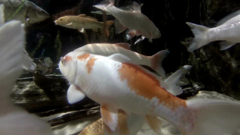 Sea life in aquarium 5 Stock Video Footage