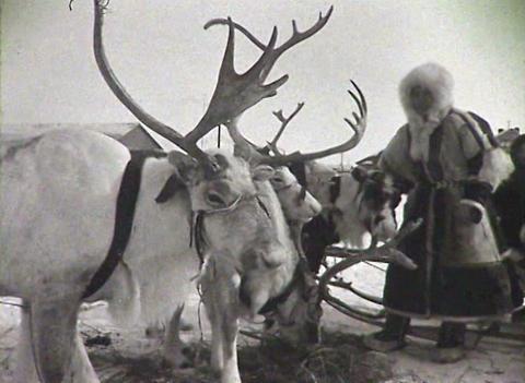 Reindeer team. Newsreel of the USSR Footage