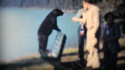 Two Men Feeding Bear Cubs At Lake Louise 1958 Vintage 8mm film Footage