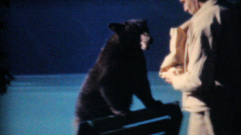 Two Men Feeding Bear Cubs At Lake Louise 1958 Vintage 8mm... Stock Video Footage