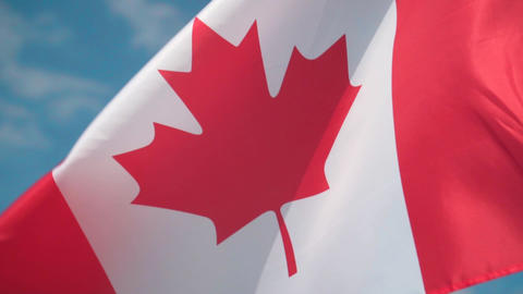 Flag of Canada. The flag of Canada develops in the wind against a sky Live Action