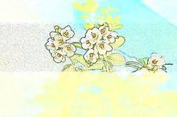 Flowers wallpaper フォト