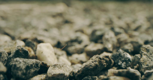 Insect or spider FPV view. Crawling on gravel. Shot on Red camera Live Action