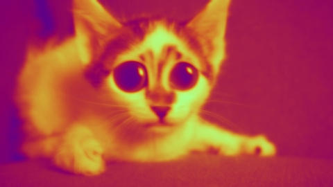 Funny big eyed cat is in disco LOOP video. Comic, funky adorable curious cat in nightclub's colorful Animation