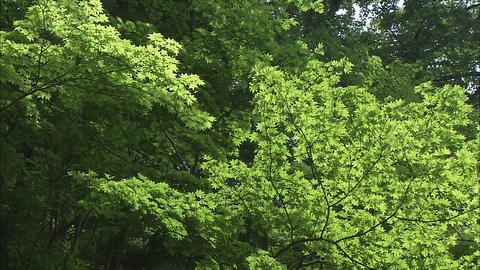 森林 ビデオ