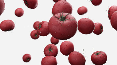 Falling tomatoes with water drops on a white background Animation