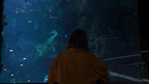 Silhouette of young woman in background of huge aquarium with tropical fishes Live Action