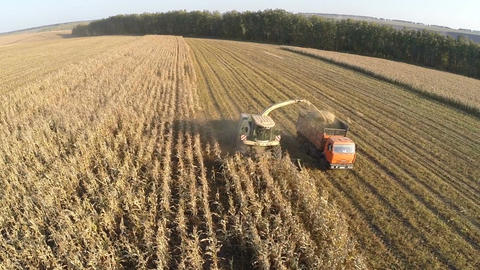 Aerial view of agricultural machinery harvesting corn Footage