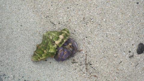 Amami Oshima, Japan - A Hermit Crab at Tomori Beach at Amami Oshima, Kagoshima, Japan Live Action