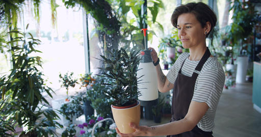 Attractive young brunette in apron spraying green plant in pot using sprinkler Footage
