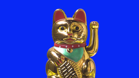 Close up shot. Lucky cat or maneki neko with money symbol for chinese culture. Good fortune for Live Action