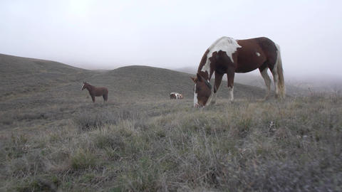 horses graze in a pasture on a cloudy day Footage