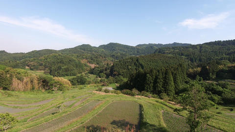 Terraced rice fields surrounded by greenery on a sunny day Live Action
