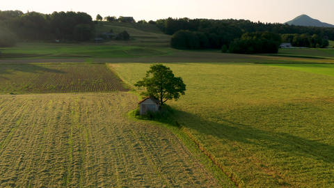 Dramatic rural landscape with old, decaying hut under a large tree amidst fields Live Action