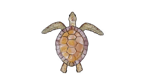 Green Sea Turtle Swimming Watercolor 2D Animation Animation