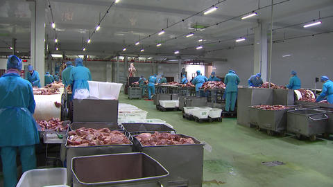 Shop for cutting carcasses of pigs and cows, workers cut the meat from the bones, the production of Live Action