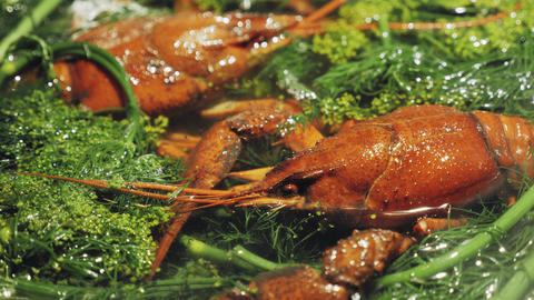 Red crayfish boiling in water with dill and salt Live Action