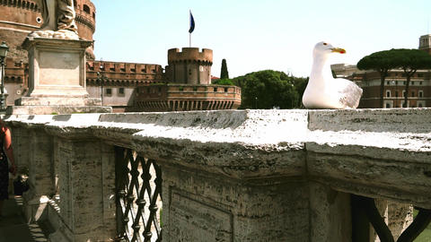 Gull on the bridge befor the Castel Sant'Angelo in Rome Live Action