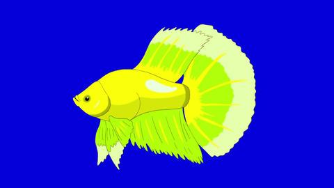 Big Green Aquarium cockerel fish Chroma Key looped Animation