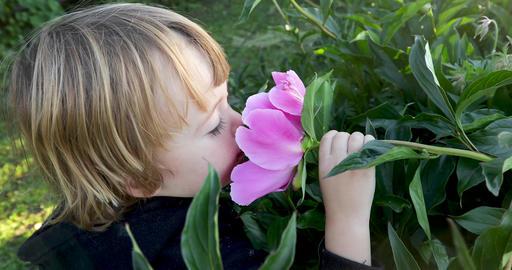 Child sniffs a flower Footage