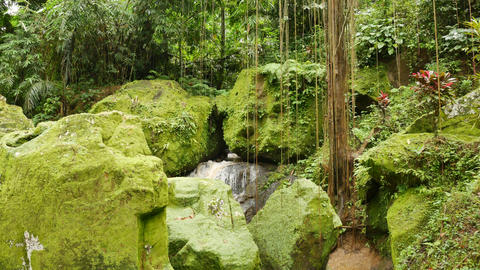 Large rocks covered in bright green moss and lianas Live Action