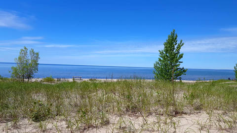 Beautiful Beach Shore With Lush Green Trees During Summer Day. Sand Shoreline With Scenic Green Live Action