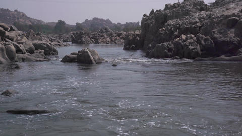 Birds live and hunt near water GIF