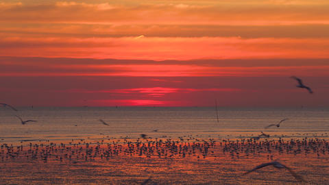 Gorgeous living coral sunset with seagulls wondering around in front. Twilight Sky. Dusk Footage