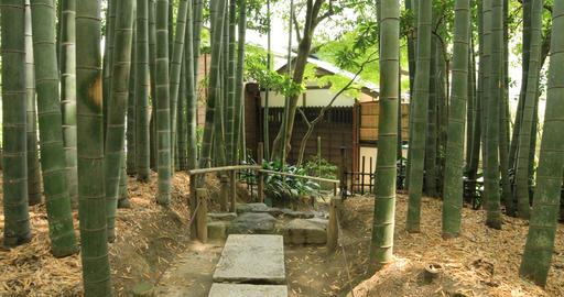 Japanese garden at Hokokuji in Kamakura Kanagawa handheld Footage
