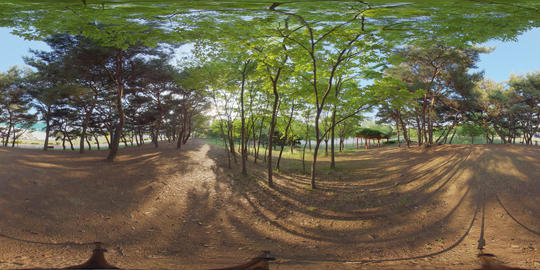 360 VR Forest And Park Video Collection 8K