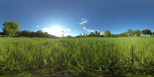 Full spherical 360 degrees panorama view, Forest and Park 360 image, VR AR content VR 360° Video