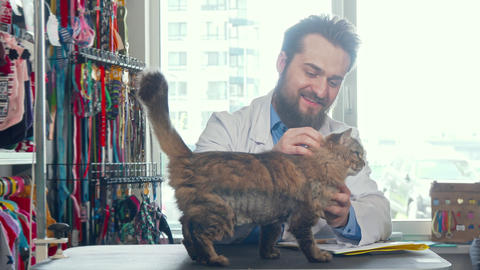 Cheerful male vet doctor petting cute cat at his clinic Footage