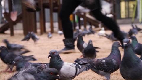 Many Gray Pigeons In The Park Live Action