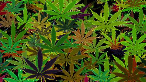 Marijuana Green Random Infinity Loop Background CG動画素材
