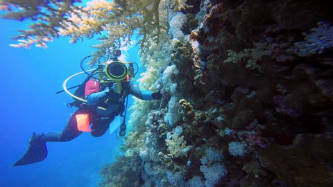 Underwater videographer, filming the Scorpion fish Live Action