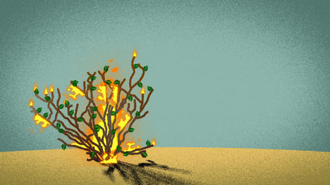 The Biblical Burning Bush in the desert Footage