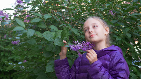 Child girl in purple jacket sniffes lilac flowers on the bush Footage
